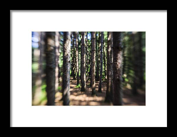 Water Framed Print featuring the photograph The Surreal Forest by Alex Potemkin
