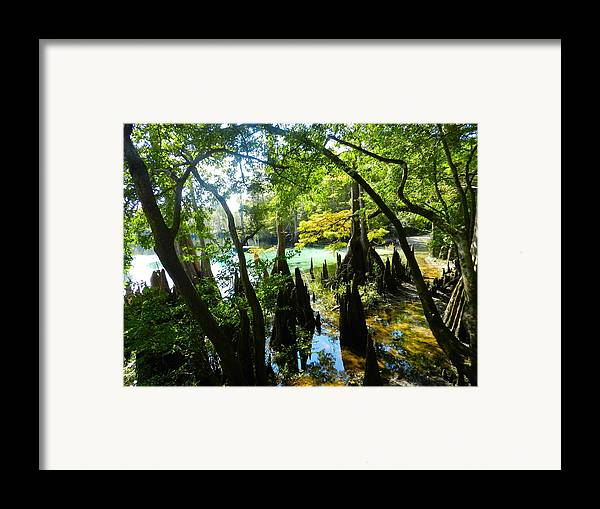Florida Swamp Framed Print featuring the photograph The Swamp By The Springs by Julie Dant