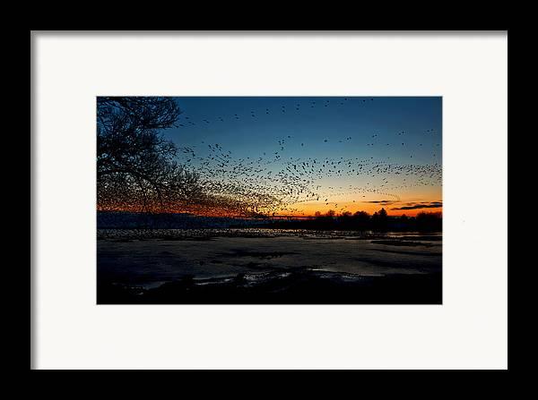 Matt Molloy Framed Print featuring the photograph The Swarm by Matt Molloy