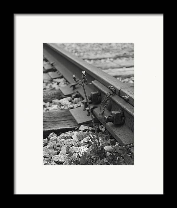 Weed Framed Print featuring the photograph The Tenacity Of Nature Greyscale by MM Anderson