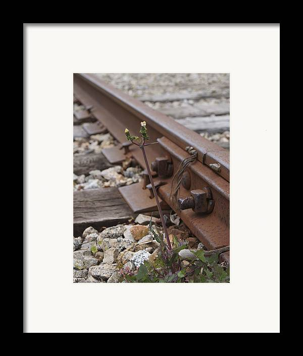 Weed Framed Print featuring the photograph The Tenacity Of Nature by MM Anderson