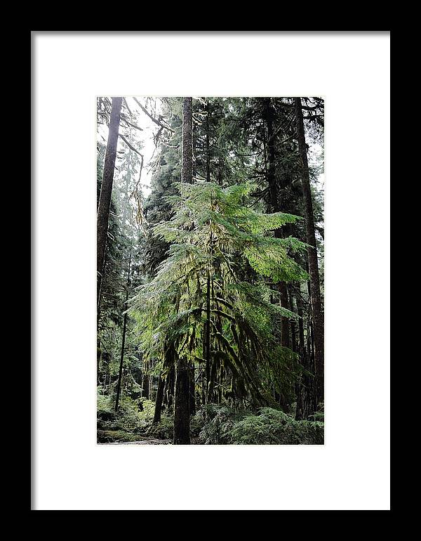 Tree Framed Print featuring the photograph The Tree In The Forest by David Andersen