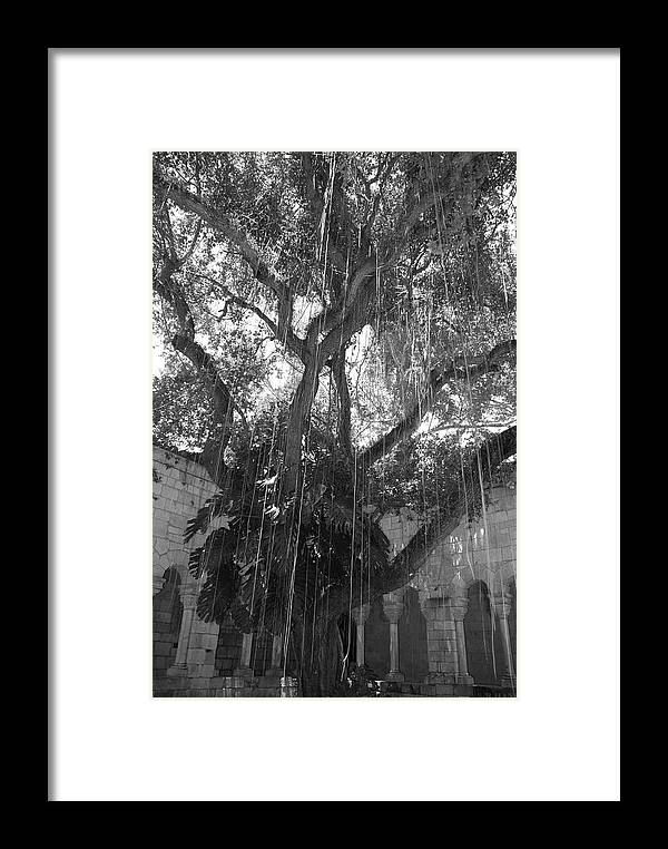 Black And White Framed Print featuring the photograph The Tree Vines by Rob Hans