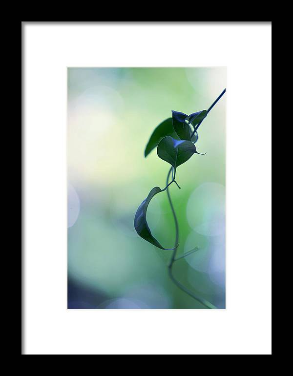 Nature Framed Print featuring the photograph The Unbearable Lightness Of Being. Natural Wonders by Jenny Rainbow