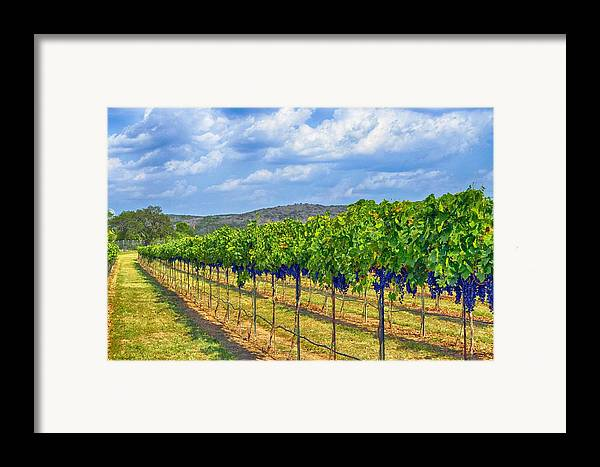Wine Country Framed Print featuring the photograph The Vineyard In Color by Kristina Deane