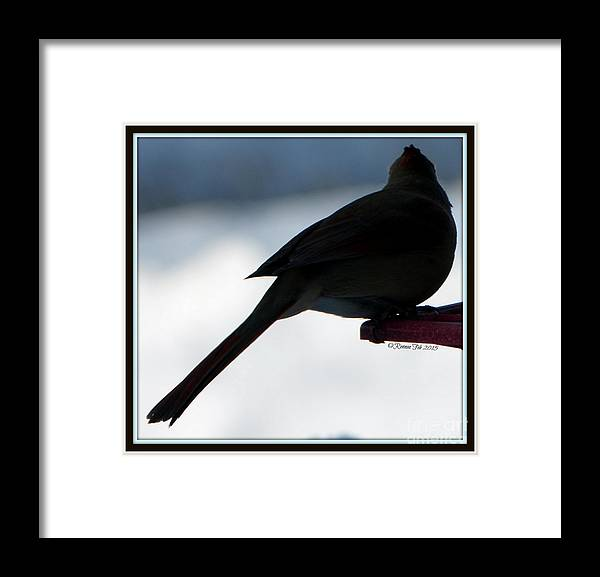 Bird Framed Print featuring the photograph The Vision by Rennae Christman