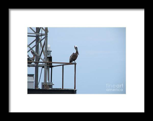 Pelican Framed Print featuring the photograph The Watcher by Jaclyn Hughes Fine Art
