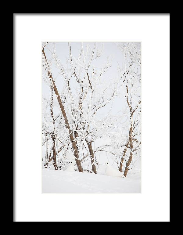 Adult Framed Print featuring the photograph The Whites Of Winter by Tim Grams