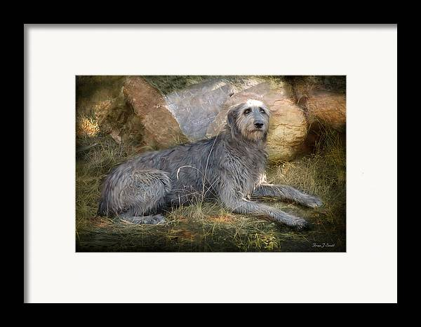 Dogs Framed Print featuring the photograph The Wolfhound by Fran J Scott