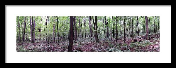 Woods Framed Print featuring the photograph The Woods by James Kirk