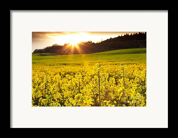 Yellow Framed Print featuring the photograph The Yellow Rapeseed Field Beautiful by Boon Mee