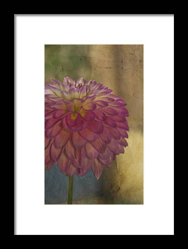 Flower Framed Print featuring the photograph There's Always Next Year by Trish Tritz