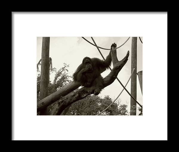 Orangutang Framed Print featuring the photograph Thinking Of You Sepia by Joseph Baril