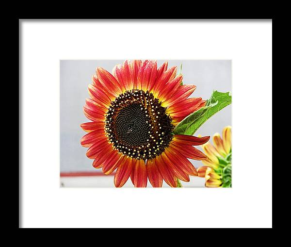 Flower Framed Print featuring the photograph Thinking Summer by Victoria Sheldon