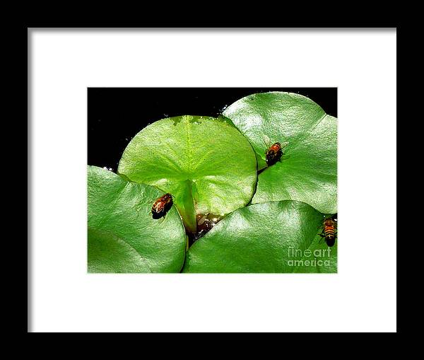 Funky Framed Print featuring the photograph Thirsty Honey Bees by Renee Trenholm
