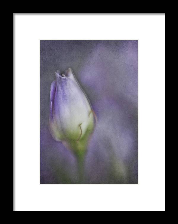 Bloom Framed Print featuring the photograph This Buds For You by David and Carol Kelly