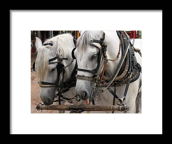 Horses Framed Print featuring the photograph This Job Sucks by Paul Anderson