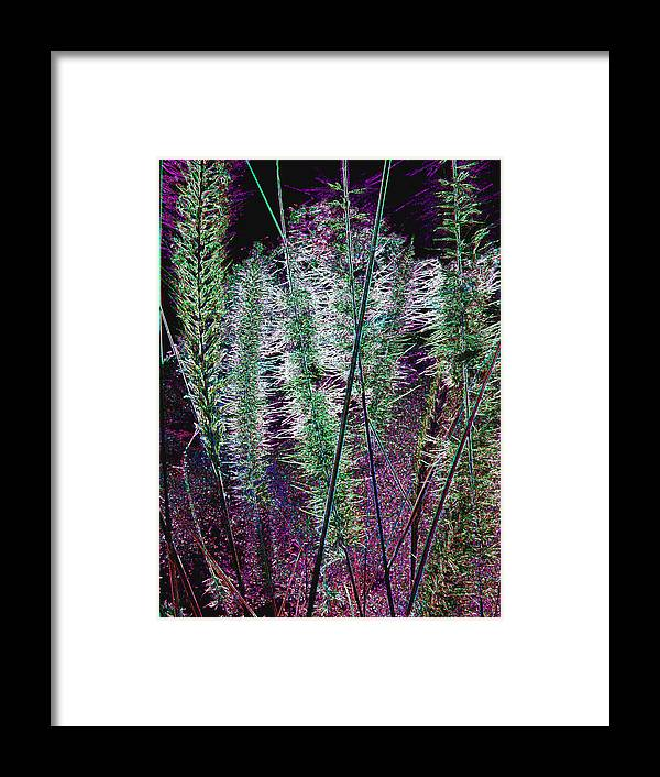 Thistles Framed Print featuring the photograph Thistles 5 by Bruce Iorio