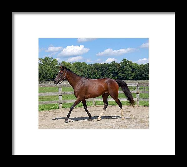 Thoroughbred Framed Print featuring the photograph Thoroughbred Day by Loreen Pantaleone