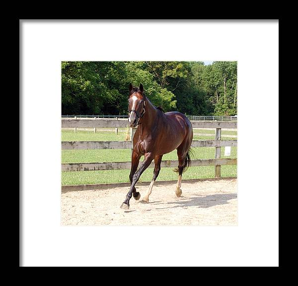 Thoroughbred Framed Print featuring the photograph Thoroughbred by Loreen Pantaleone