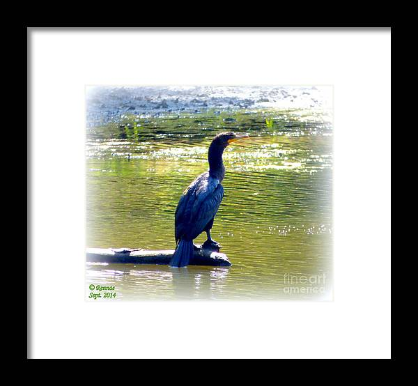 Bird Framed Print featuring the photograph Thoughtful Time by Rennae Christman