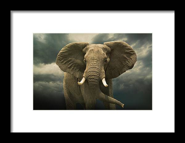 Kenya Framed Print featuring the photograph Threatening African Elephant Under by Buena Vista Images