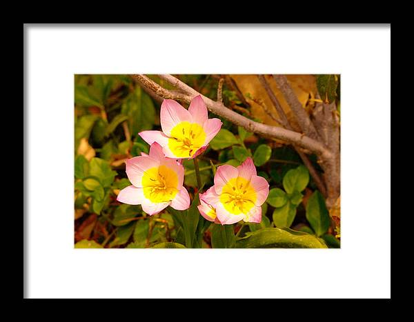 Flowers Framed Print featuring the photograph Three Flowers by Jeff Swan