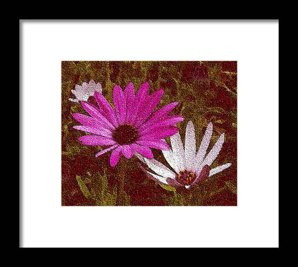Daisies Framed Print featuring the photograph Three Flowers On Maroon by Ben and Raisa Gertsberg