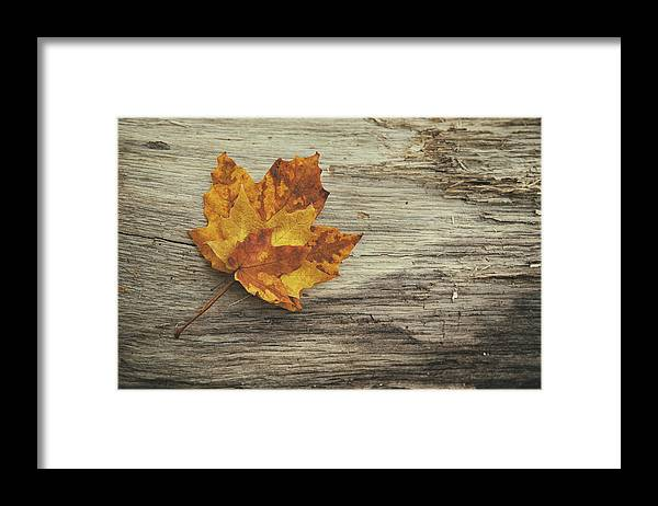 Maple Leaf Framed Print featuring the photograph Three Leaves by Scott Norris