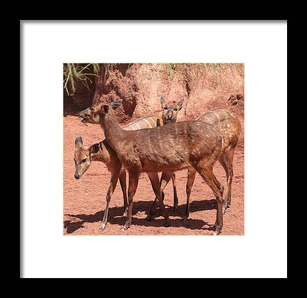 Animal Framed Print featuring the photograph Three Of Us by Jill Mitchell