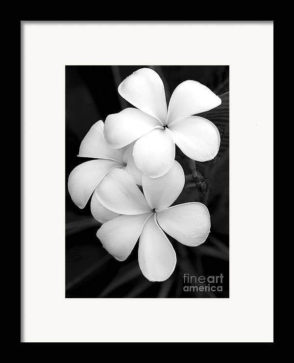 Macro Framed Print featuring the photograph Three Plumeria Flowers In Black And White by Sabrina L Ryan