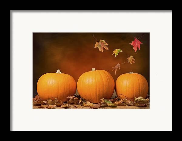 Pumpkin Framed Print featuring the photograph Three Pumpkins by Amanda Elwell