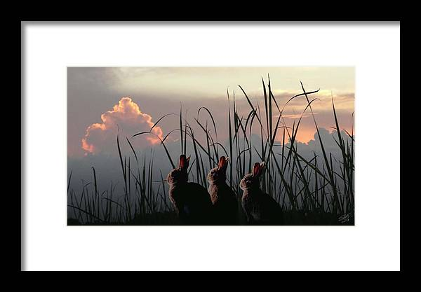 Rabbits Framed Print featuring the digital art Three Rabbits In The Setting Sun by IM Spadecaller