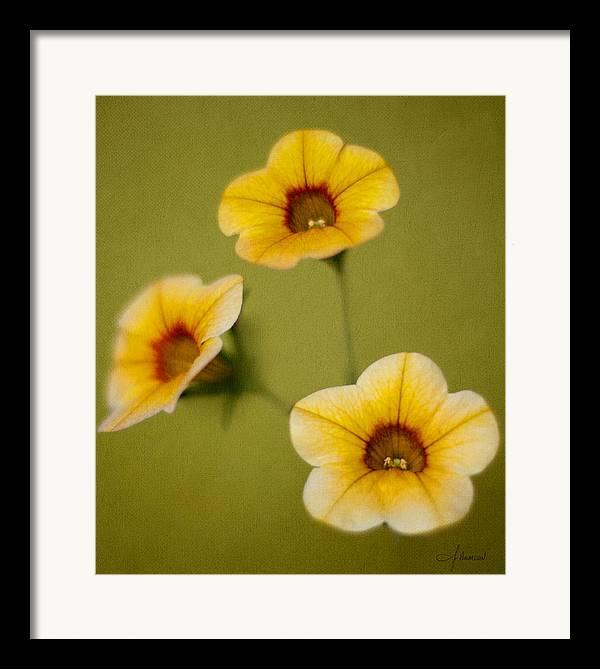 Beautiful Framed Print featuring the photograph Three Sisters by John Hamlon