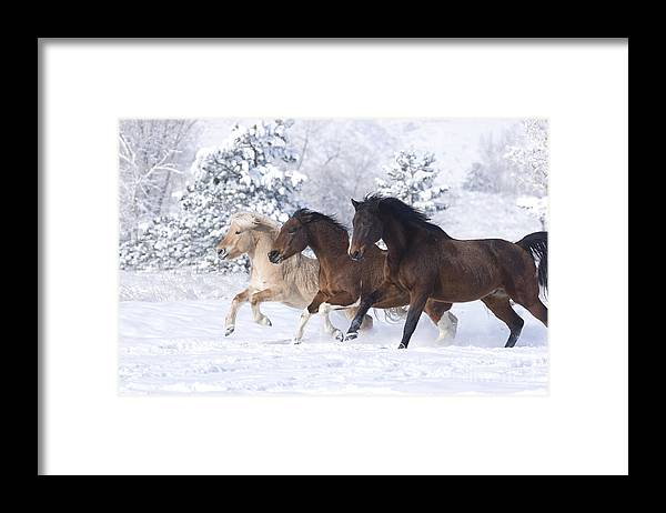 Horse Framed Print featuring the photograph Three Snow Horses by Carol Walker