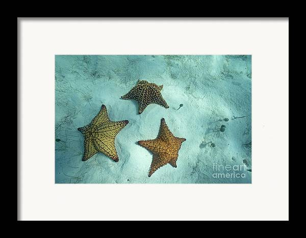 Abundance Framed Print featuring the photograph Three Starfishes On Sandy Seabed by Sami Sarkis
