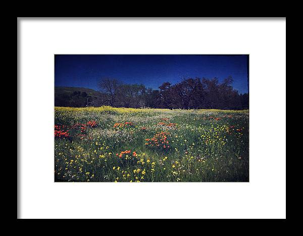 Pleasanton Framed Print featuring the photograph Through The Blooming Fields by Laurie Search