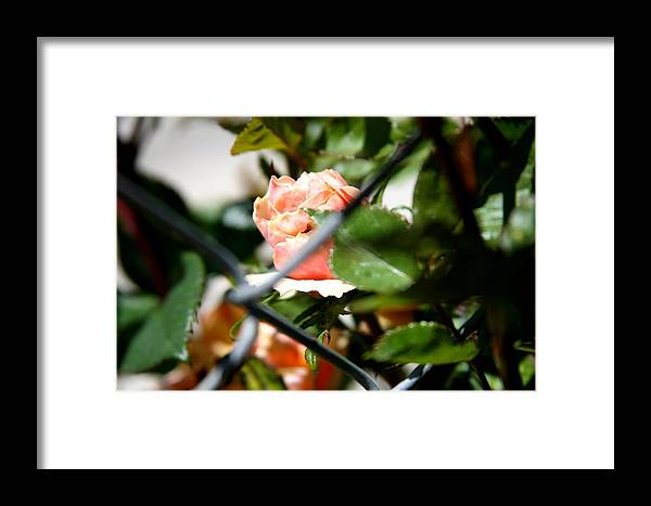 Fence Framed Print featuring the photograph Through The Fence by Becca Wilson