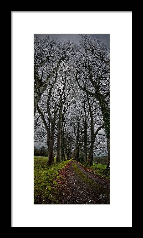 Trees Framed Print featuring the photograph Through The Trees by Jason Lanier