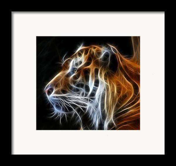 Tiger Framed Print featuring the photograph Tiger Fractal by Shane Bechler