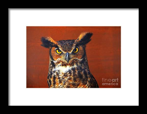 Bird Framed Print featuring the photograph Tiger Owl by Rodney Campbell