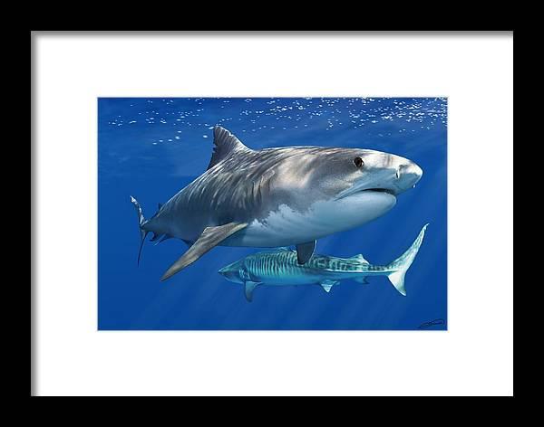 Tiger Shark Framed Print featuring the digital art Tiger Shark by Owen Bell