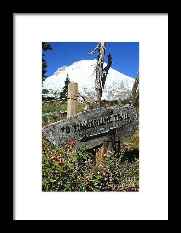 Mount Hood Framed Print featuring the photograph Timberline Trail by Cari Gesch