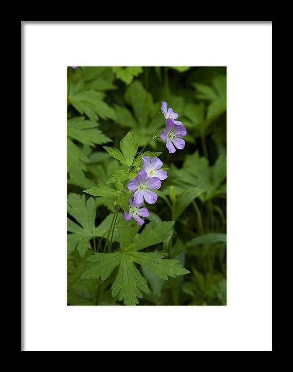 Flower Framed Print featuring the photograph Tiny Flowers In The Forest by Thomas Firak