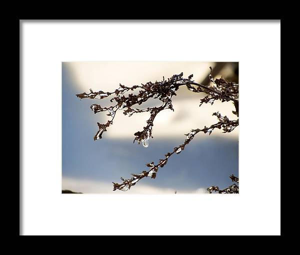Tiny Icicles Framed Print featuring the photograph Tiny Icicles by Cynthia Woods