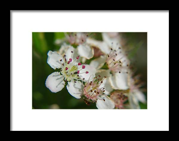 Tiny Framed Print featuring the photograph Tiny Pretty Things by Patricia Trudell