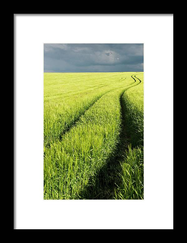 Scenics Framed Print featuring the photograph Tire Tracks In Grain Field by Thomas Winz