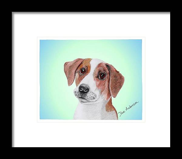 Dog Framed Print featuring the drawing Toffee - A Former Shelter Sweetie by Dave Anderson