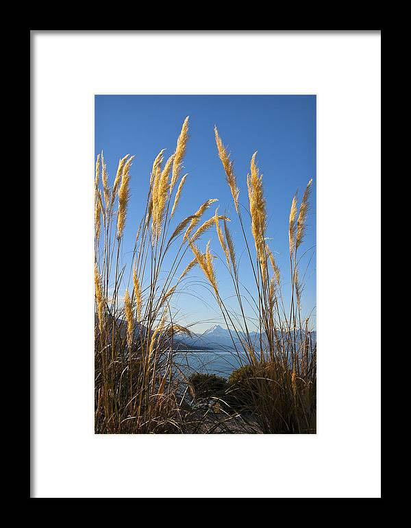 Toitoi Framed Print featuring the photograph Toitoi And Mountain by Jenny Setchell