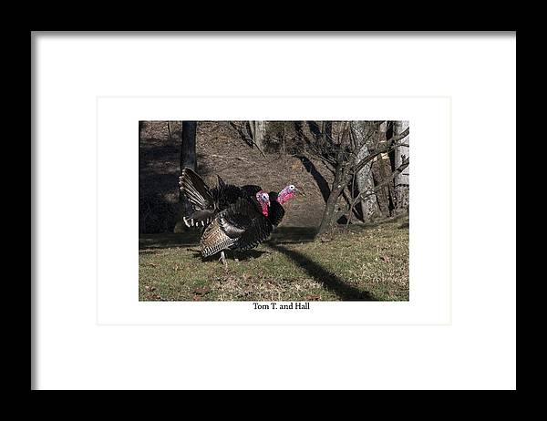 Gobblers Framed Print featuring the photograph Tom T. And Hall by Terry Spencer